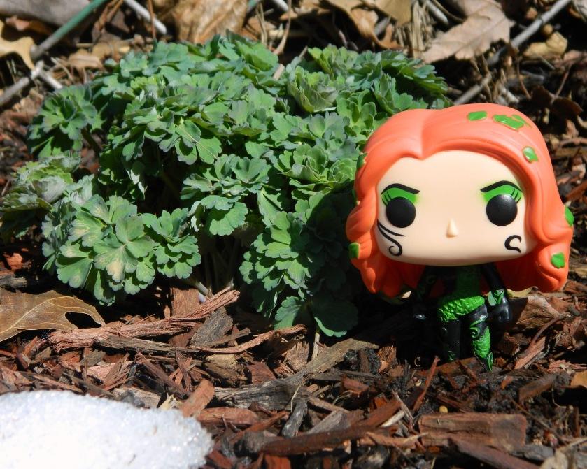 Poison Ivy DSCN1116