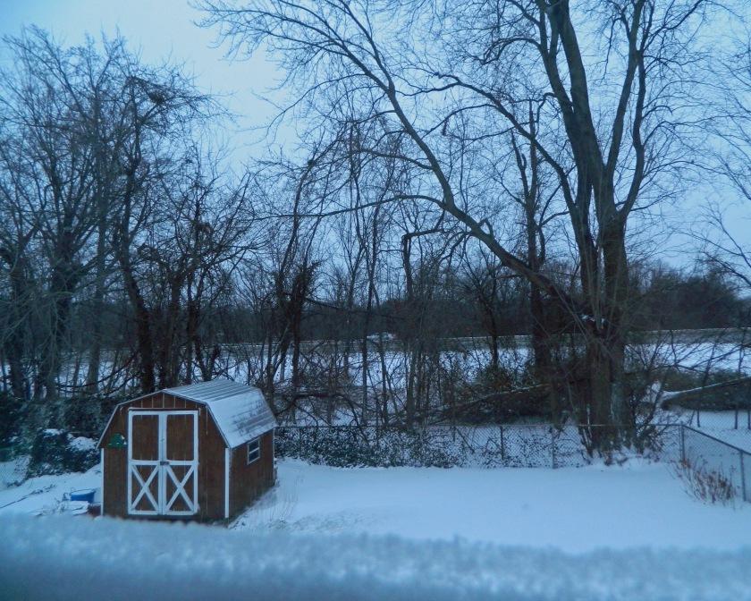 Snow DSCN7127